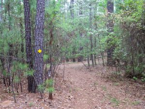 Baker Creek - Trails and Travel