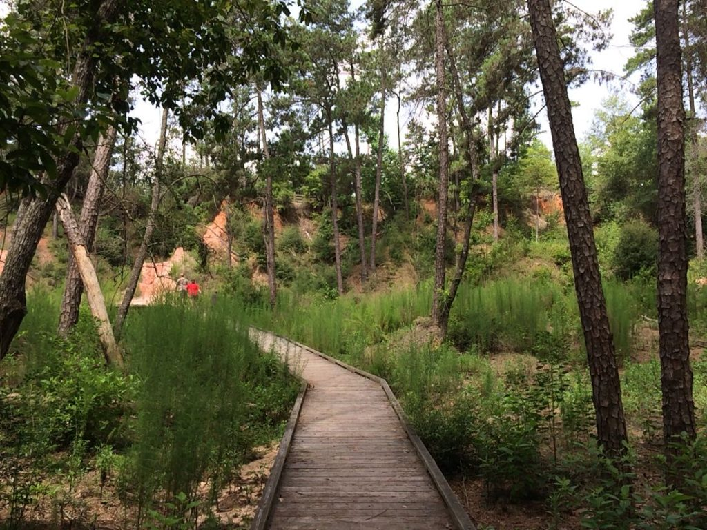 Bogue Chitto State Park Trail