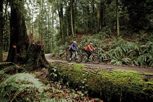 Forest Park - Portland Monthly