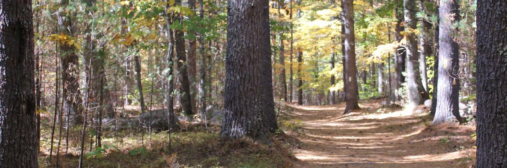 Libby Hill Forest Trail in Maine