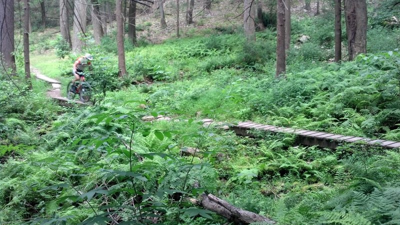 Rothrock State Forest (State College) - MTB Project