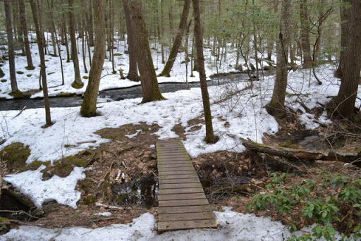 Tucker Brook Town Forest Trail - NH Family Hikes